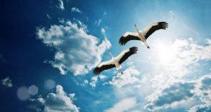Лёгкий настрой на мир и гармонию после ссоры или неудачи